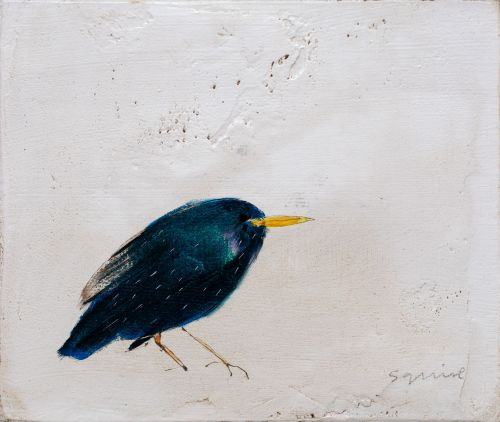 starling | andrew squire