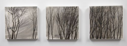 Bare Trees | Anna King