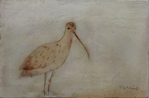 Curlew | Andrew Squire